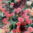 …it may seem as the worse day ever huh? who would want to go to the Los Angeles Flower Market and deal with the Black Friday-isque last minute crowds, mainly […]